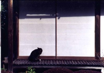 Animal Passions is a series of images where Takayama seeks to release animal identities.