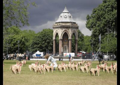 DOG in Victoria Park