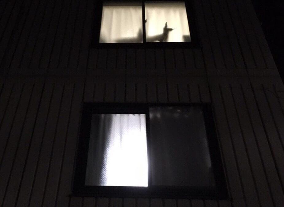DOGTokyo2017 ご主人を待つ犬のシルエットが夜の窓に