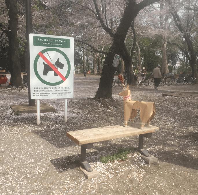 段ボールの犬 Tokyo DOG のつぶやき ー 犬の立ち入り禁止のサインの前ではてな??
