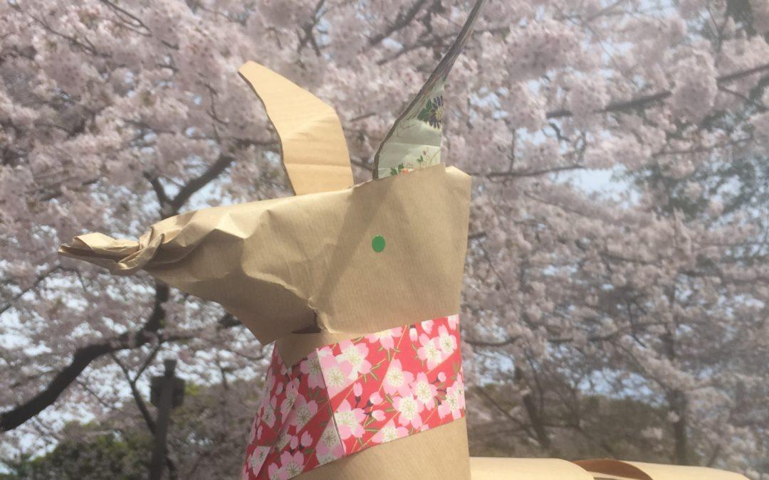 DOGTokyo2017 comes to see the Meguro Sakura