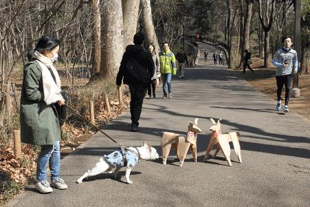 ブルドックとDOG段ボールの犬の御目見