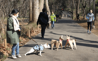 Tokyo Bulldog meets DOGTokyo2017