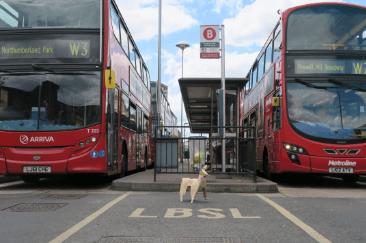 赤く輝く二階建てバスとTheDog。