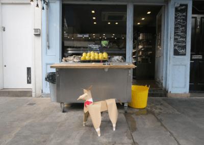 DOG and fish shop