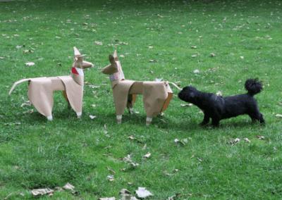DOG authenticity check