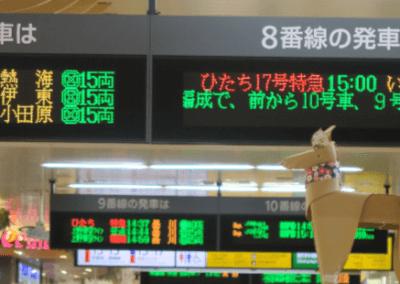 DOG checking Shinkansen times at Ueno