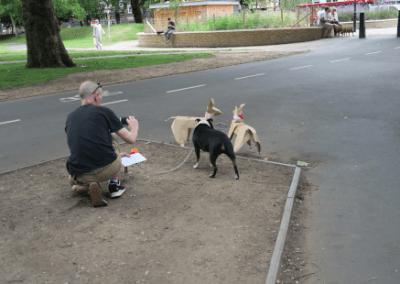 DOG making friends