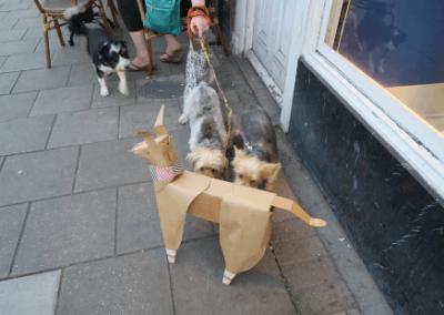 DOG recognition