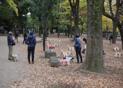 DOG in Tokyo Park