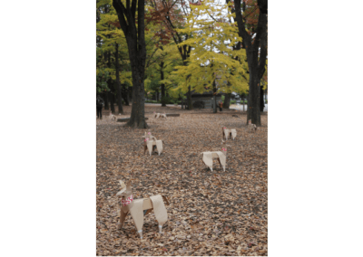 DOG lining the woods