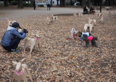 Dog walking amongst the DOG Tokyo 2017 installation