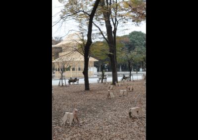 DOG in central Tokyo