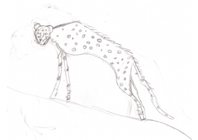 Cheeta drawing
